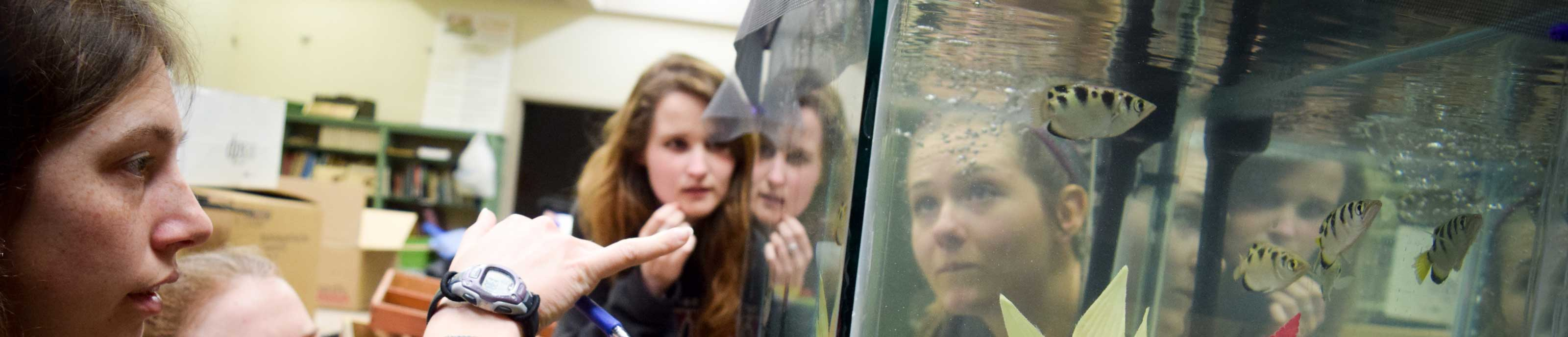 Biology students examine fish in an aquarium